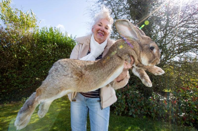 Giant Bunny Death