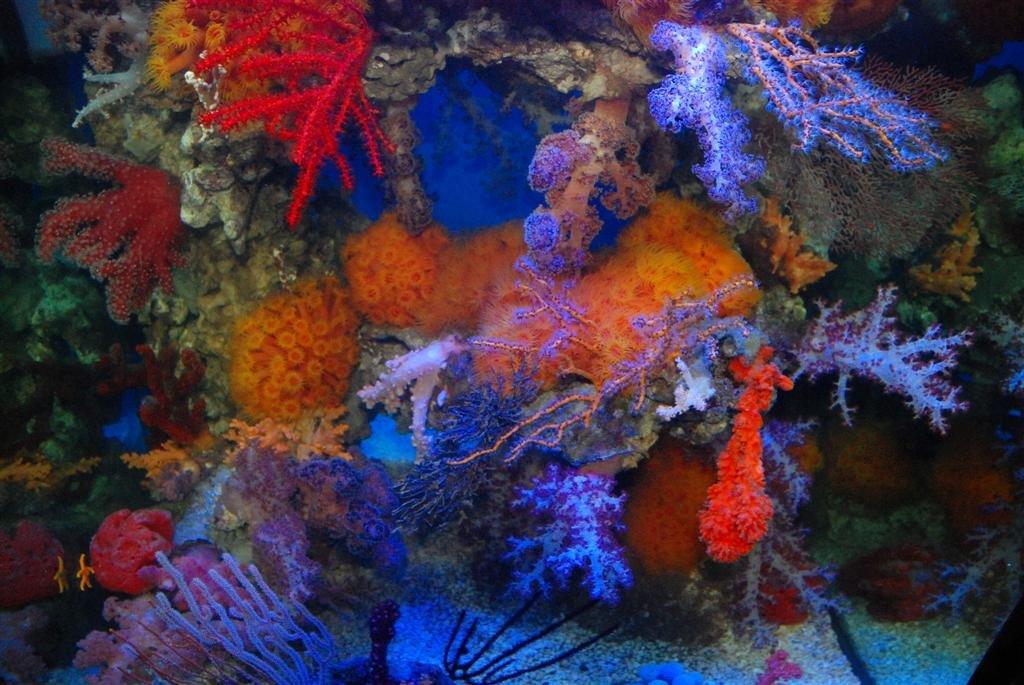 Deepwater Photosynthesis