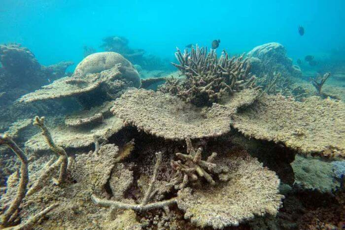 The Great Barrier Reef: Now