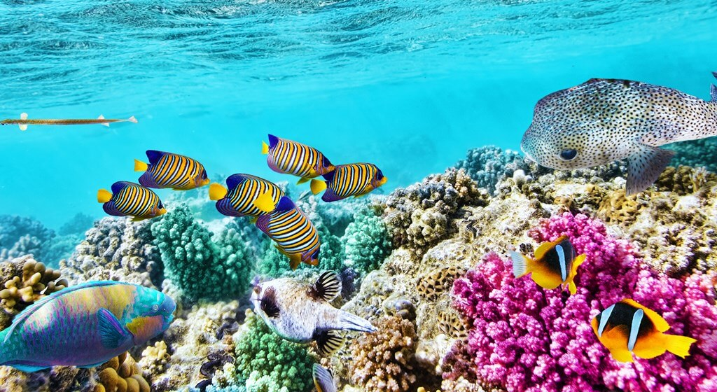 Australia's Great Barrier Reef: Then