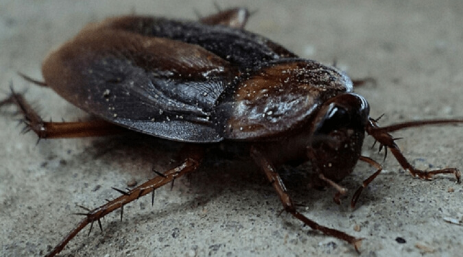 Palmetto Bugs Are a Terrifying Part of Life