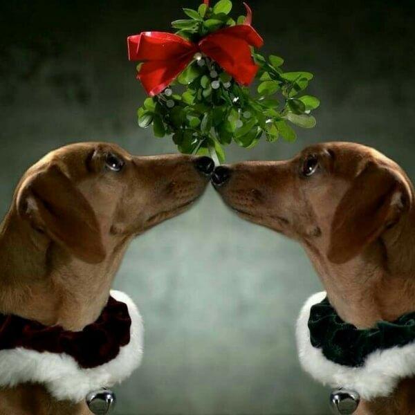 Kiss You Under The Mistletoe