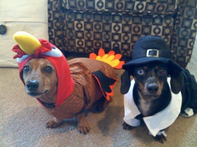 Festive Dogs