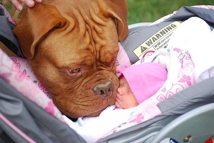 Big Dog Baby .jpg