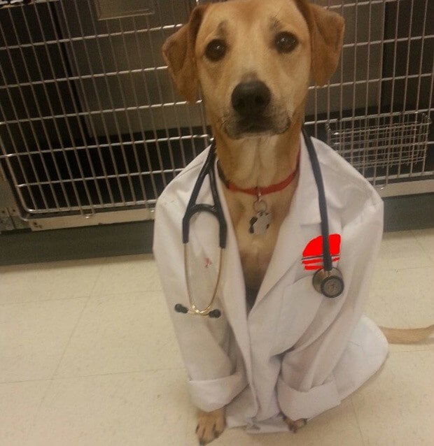 Dog Doctor In The House.jpg