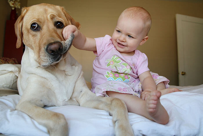 Doggy Flapps.jpg