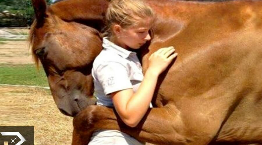 Horse Hug.jpg