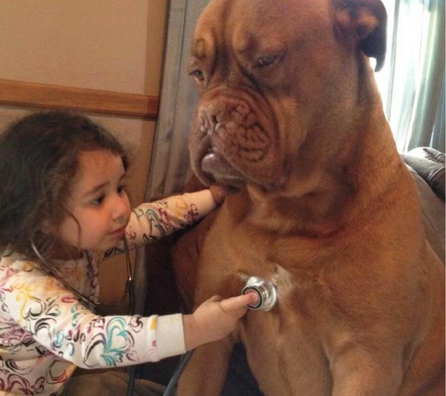 Taking Dogs Heartbeat.jpg