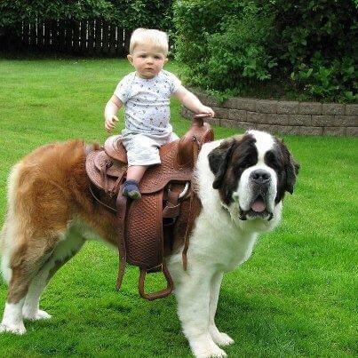 Transport The Kid .jpg