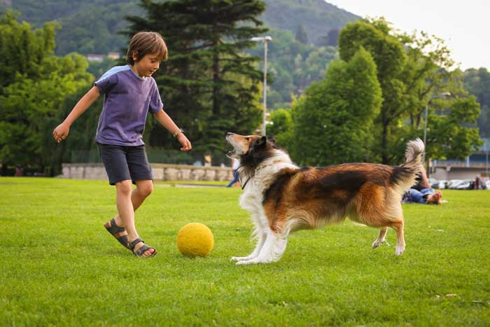 Collie dog playing with kids