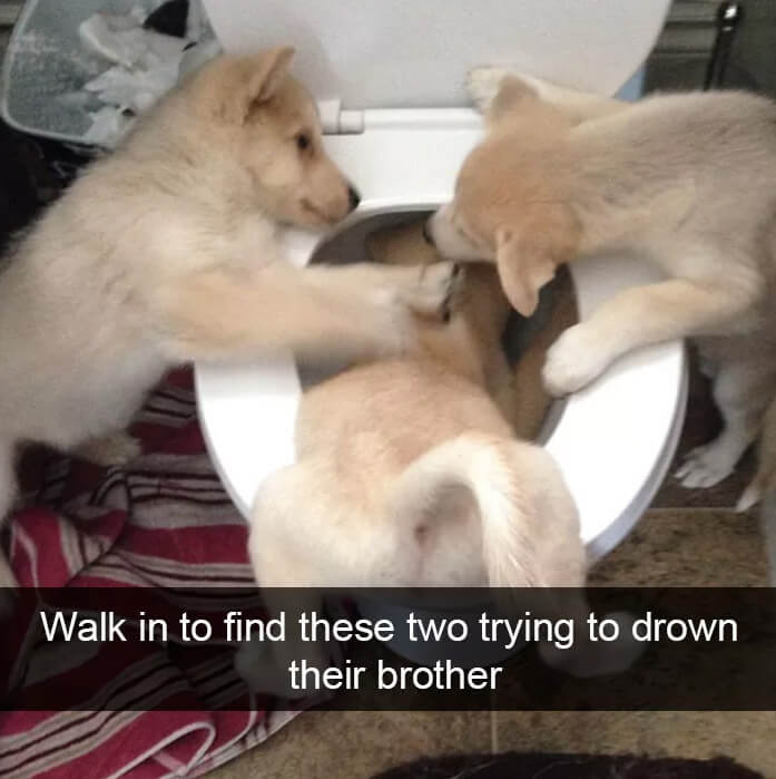 dogs-smothering-brother.jpg