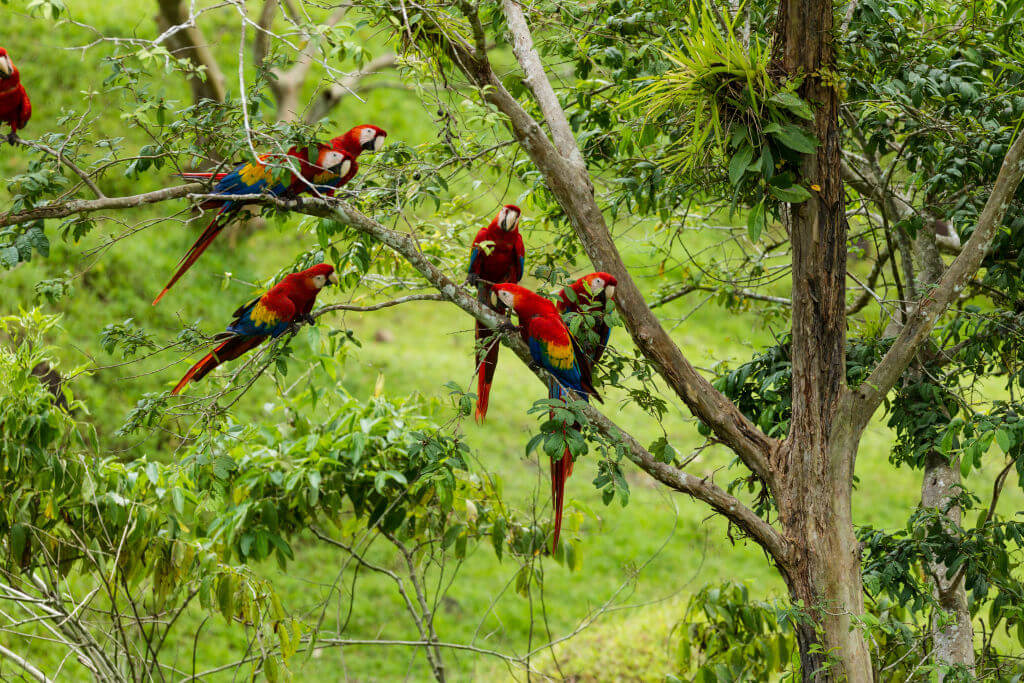 1020_24_JGF_birds_scmacaws_CR-8567