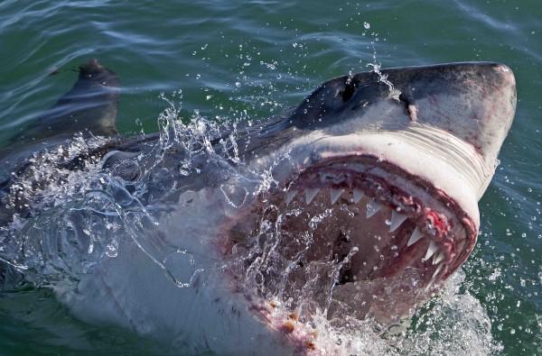 craziest-sharks-01.jpg
