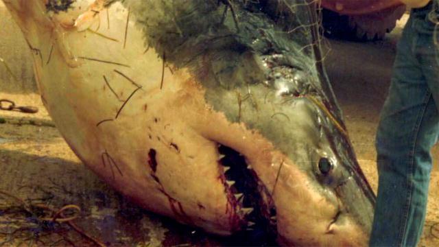 craziest-sharks-02.jpg