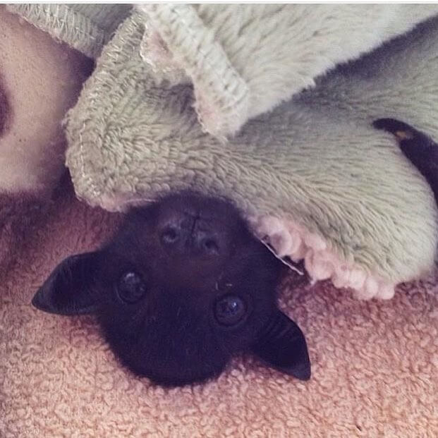 cute little puppy bat.jpg
