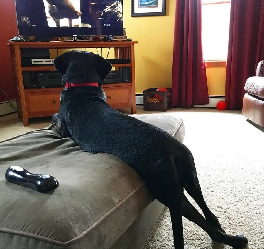 dog watching babe (1).jpg