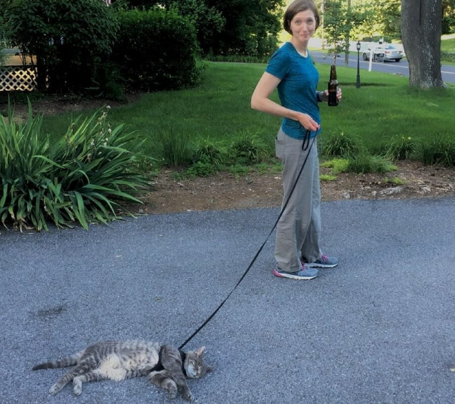 walking cats.jpg