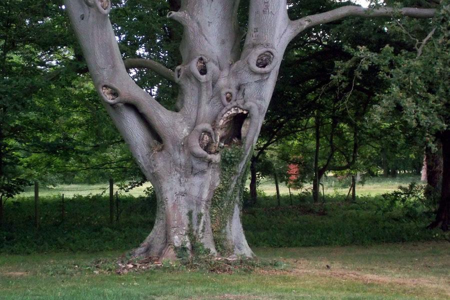 scary tree.jpg