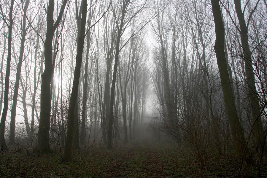 scary woods.jpg