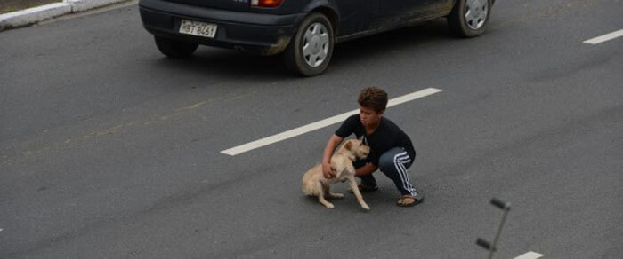 Boy-Saves-Dog-From-Traffic.jpg