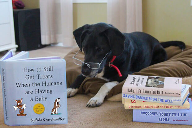 Family Dog Pregnancy.jpg