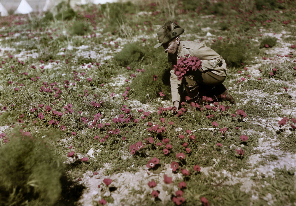 Picking Flowers.jpg