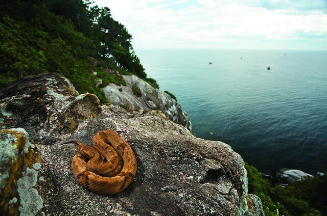 snake island.jpg